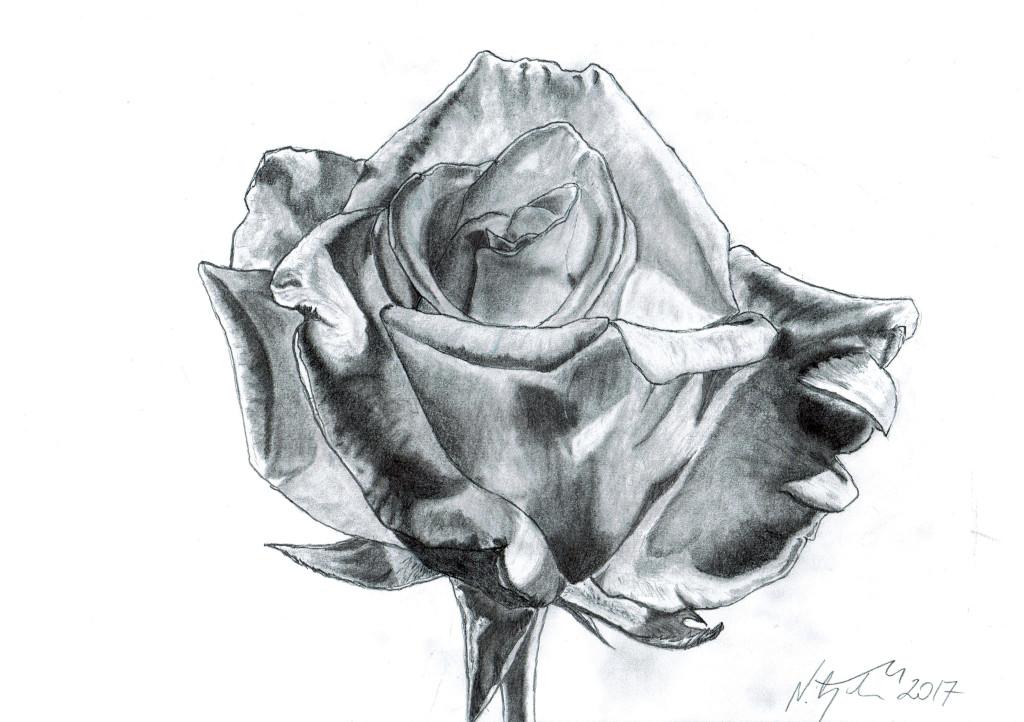 Rose by MateuszNitychoruk