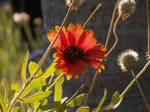 Leaning Flower
