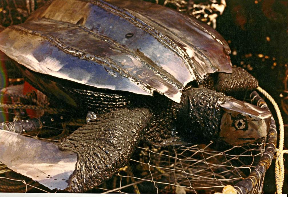 Leatherback turtle by ou nrtist on deviantart