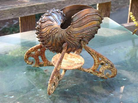 Paper Nautilus (Argonauta Hians) on new base