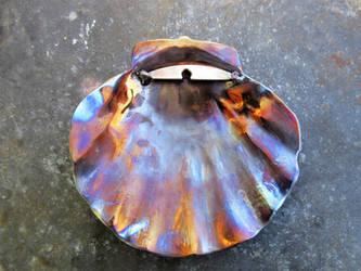 Atlantic Bay Scallop (Argopecten irradians)