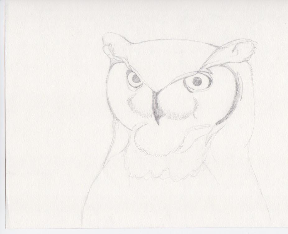 Owl WIP by RedWolf75