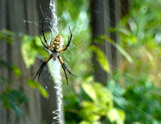 Spider by nathanielwilliam
