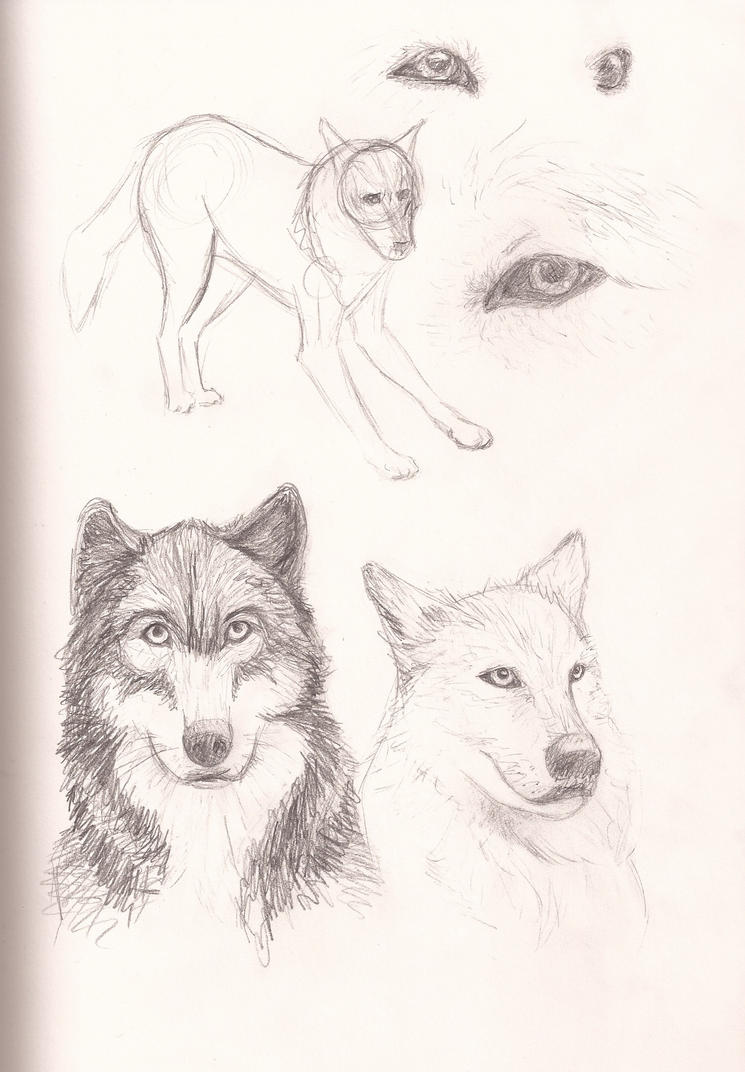 wolf sketches by Rahona