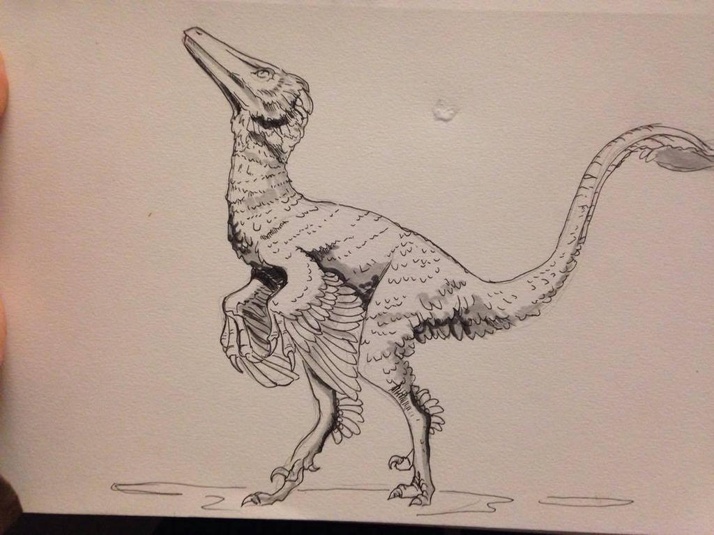 Day #18 Inktober - Troodon by Ginger-Ketchup