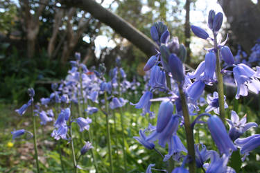 the berryblue bells toll...