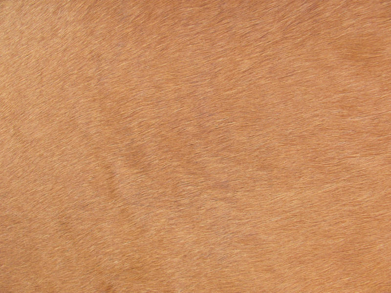 Horse skin Texture 01 stock by FrostBo on DeviantArt