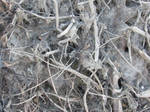 Root Texture 01