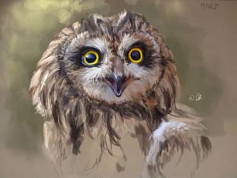 Owl by lotemsason