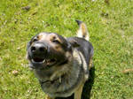 Happy Pup 2
