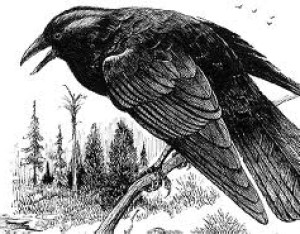 The-Crows-Eye's Profile Picture