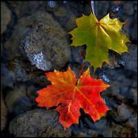 Two leaves.. by closer-to-heaven