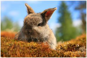 Funny Bunny II