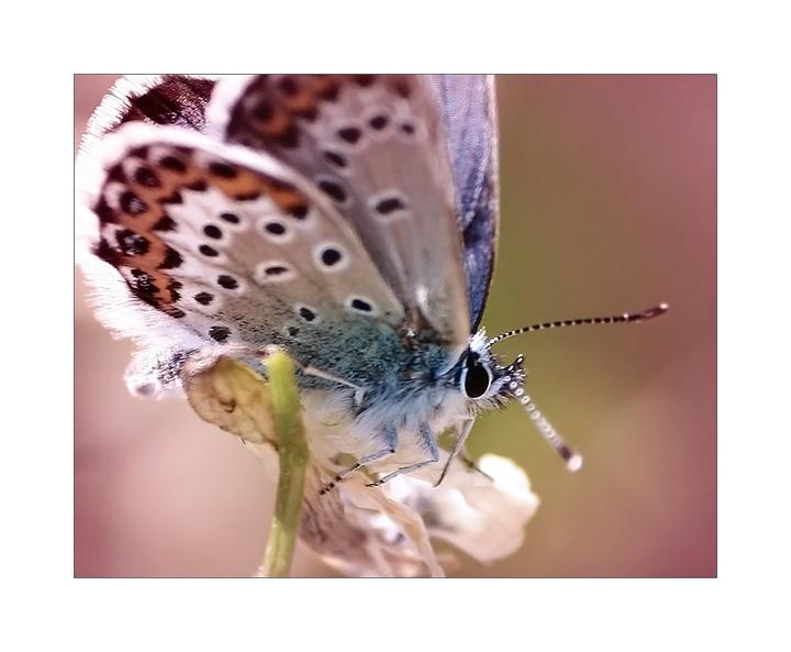 butterfly heaven wallpaper - photo #40