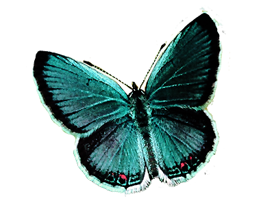 mariposa png by rubyok