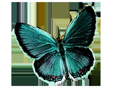 mariposa png by rubyok