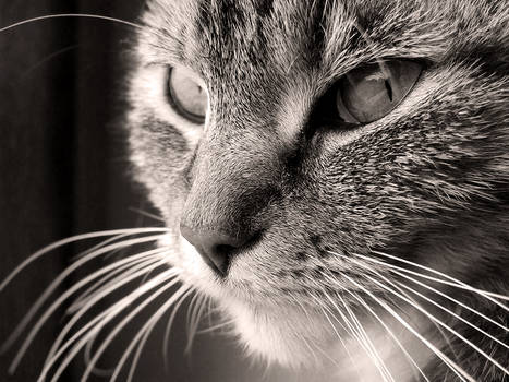 12. cat's eyes