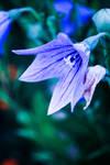 84. magic flower