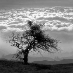 tree 14 by Hengki24