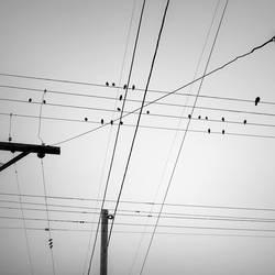 birds by Hengki24