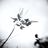 tree 18 by Hengki24