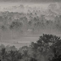 mist 61