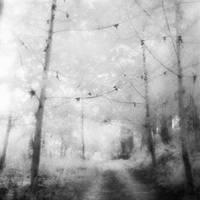 tree 22 by Hengki24