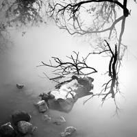 tree 55 by Hengki24