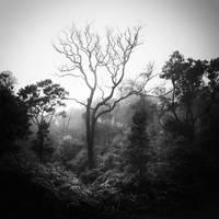 tree 59 by Hengki24