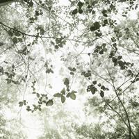 Greendream by Hengki24