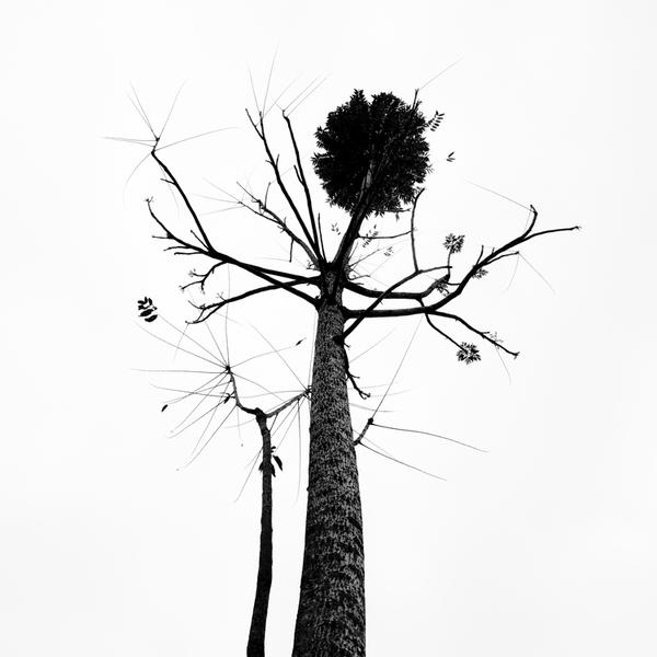 tree 75 by Hengki24