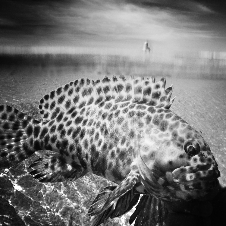 ocean 161 by Hengki24