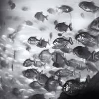 Aquarium X by Hengki24