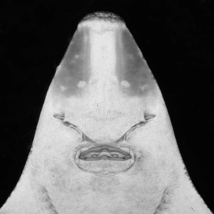 Aquarium XII by Hengki24