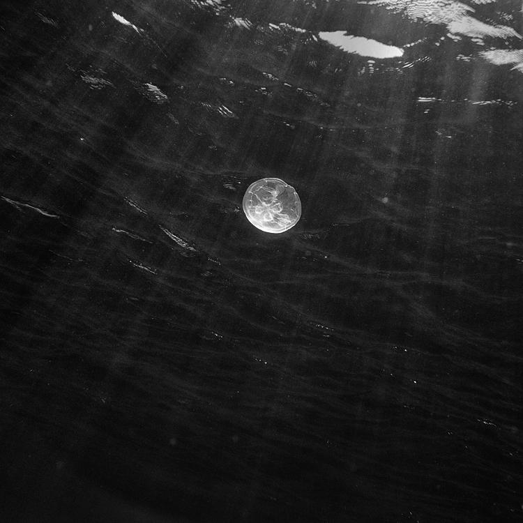 moon Jelly by Hengki24