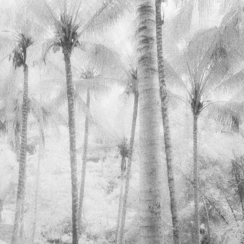 CocoNut by Hengki24