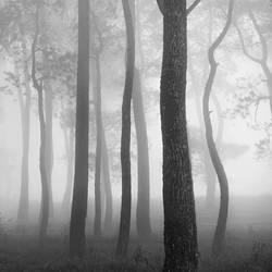 mist 155 by Hengki24
