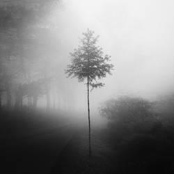 tree 84 by Hengki24