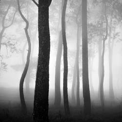 mist 158