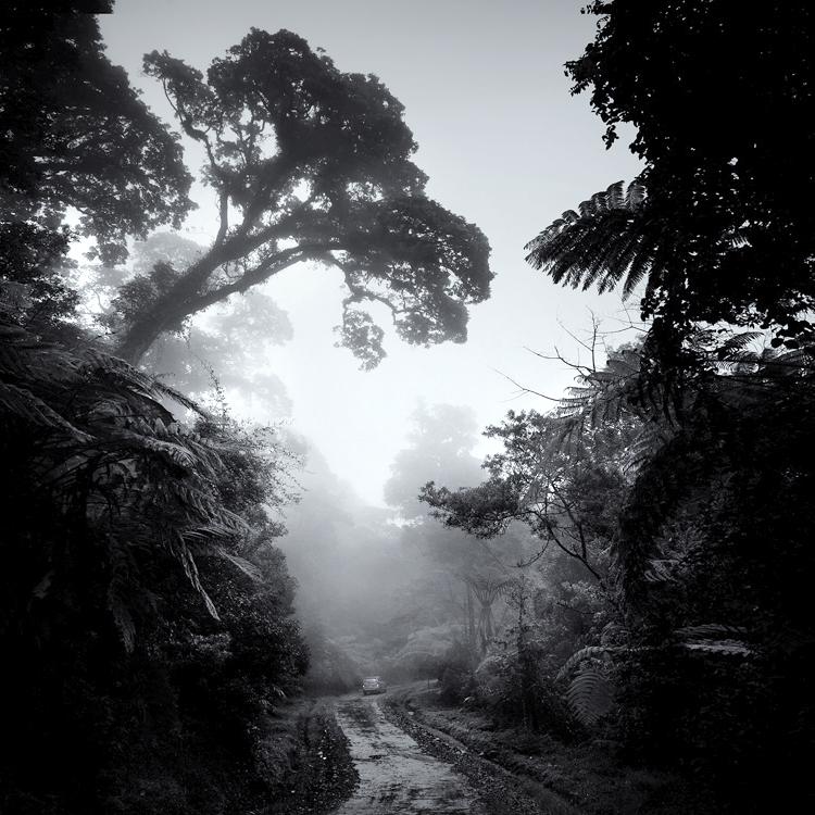 Forest Dream by Hengki24