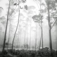 mist 163 by Hengki24