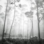 mist 163