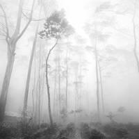 mist 170 by Hengki24