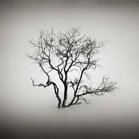 mist 174 by Hengki24