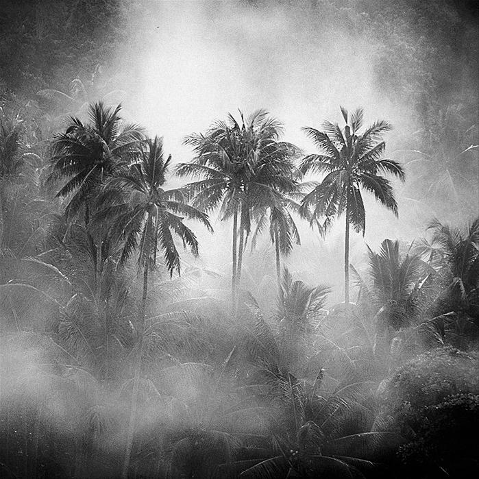 Coconuts by Hengki24