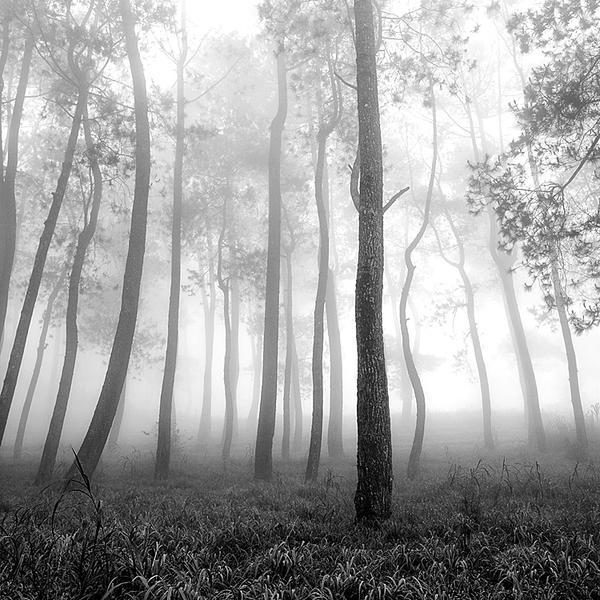 mist 165 by Hengki24