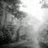 RainForest by Hengki24