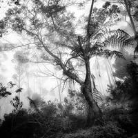Tree by Hengki24