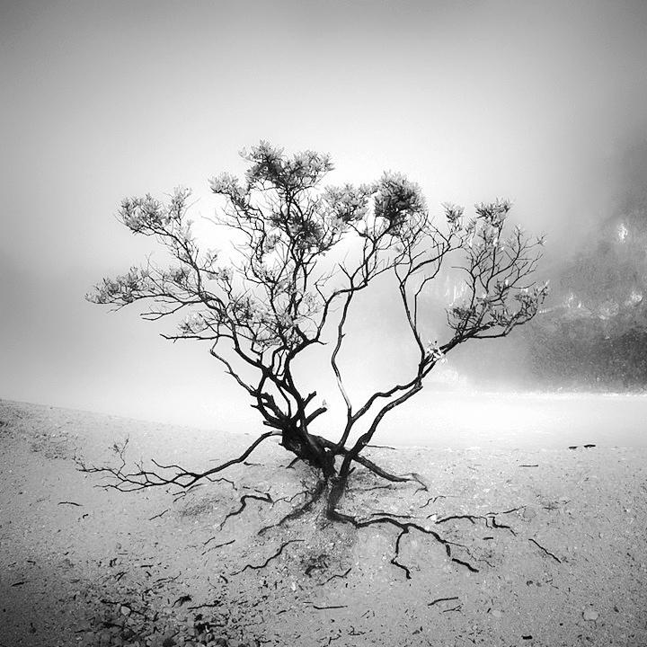 Wonderland by Hengki24