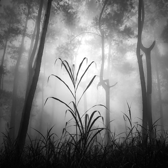 Deep Forest by Hengki24